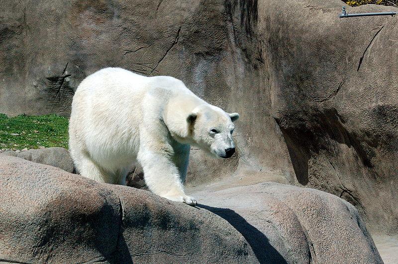 フィラデルフィア動物園
